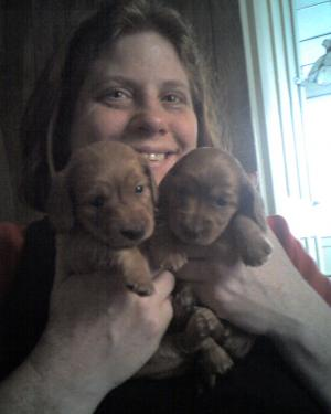 Baby Dachshunds Need Loving Homes