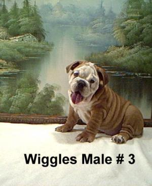 AKCregisteredEnglishBulldogpuppiesforsale