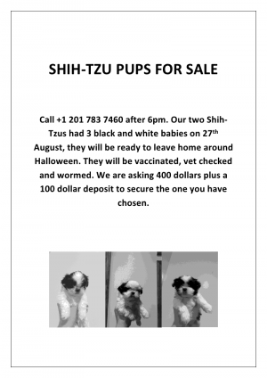 ShihTzupuppies