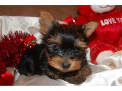 BEAUTIFULPUPPIESFORSALE